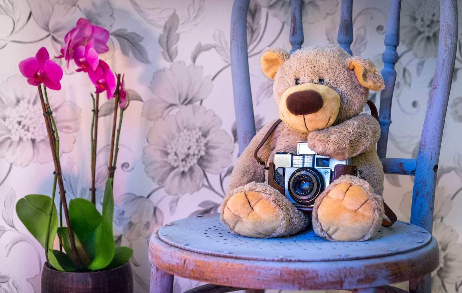 fotografía oso Teddy para niños