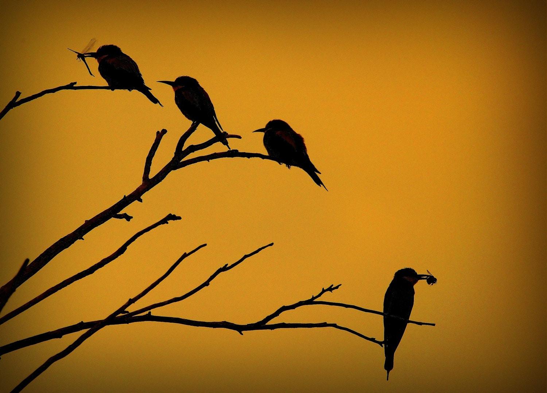 fotografía pájaros comiendo insectos