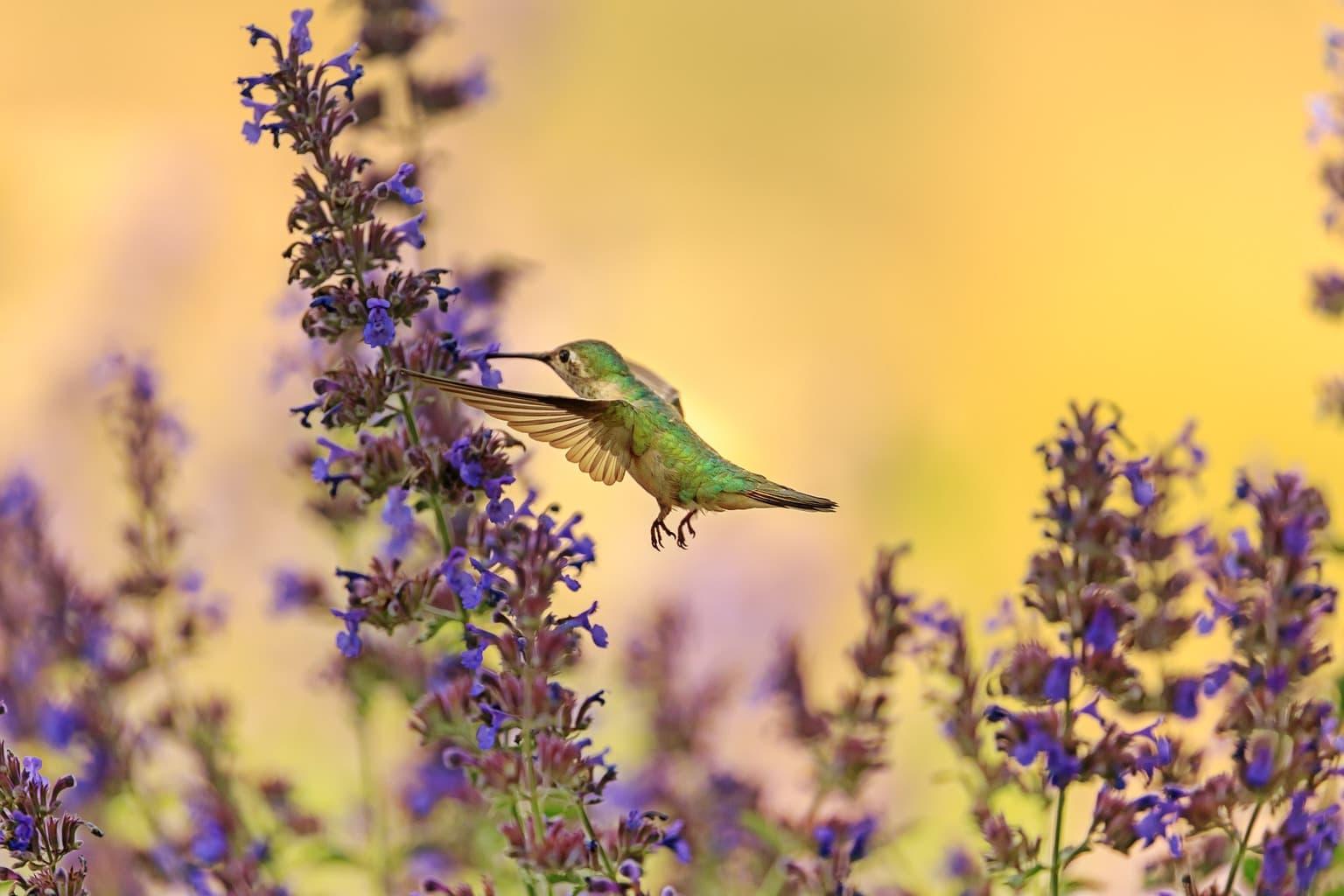 fotografía de un pájaro y flores