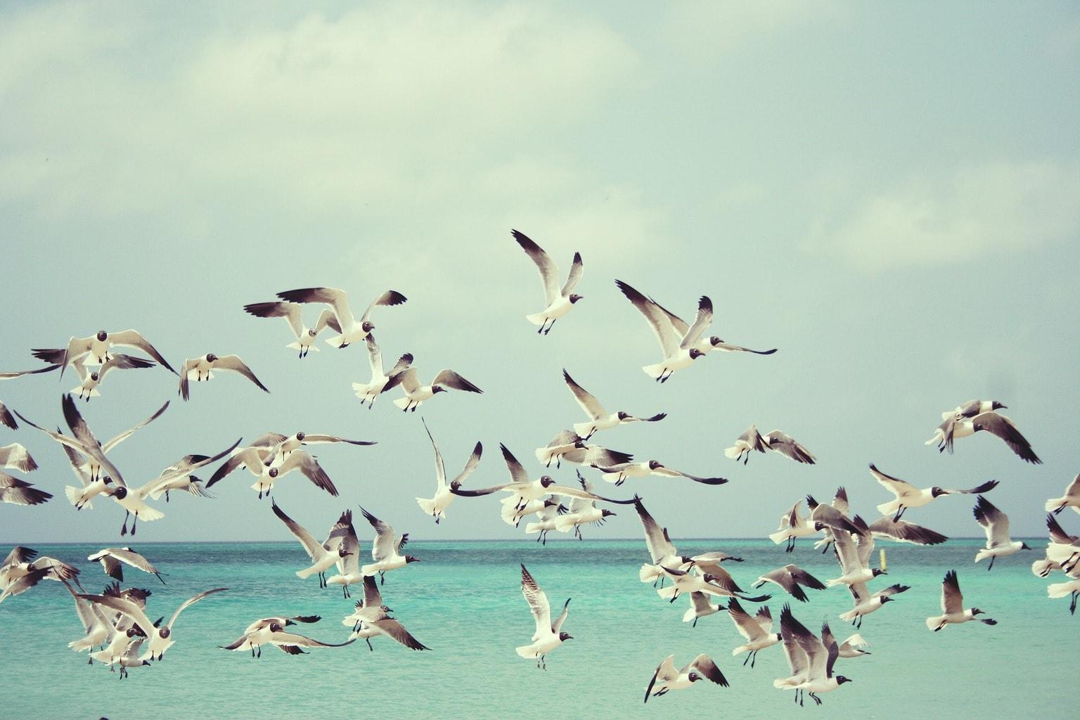 fotografía gaviotas