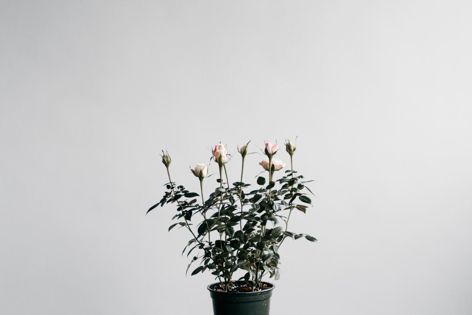 Fotografía de una planta en una maceta