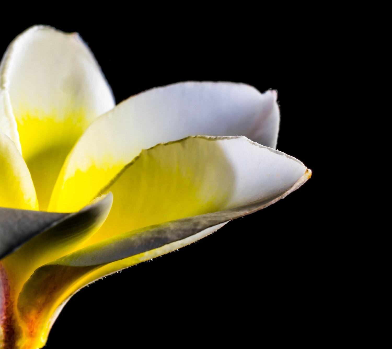 fotografía macro de una flor con fondo negro