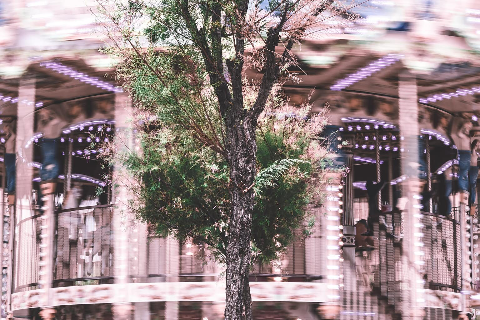 fotografía de un árbol
