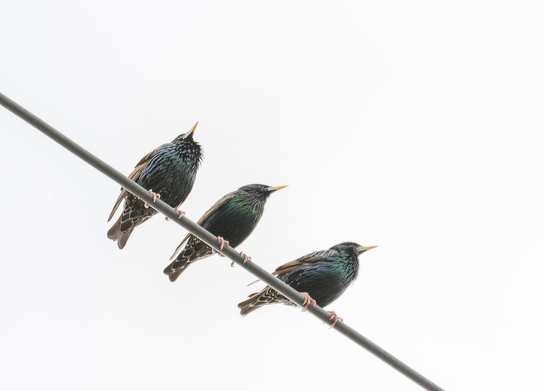 fotografía de tres pájaros