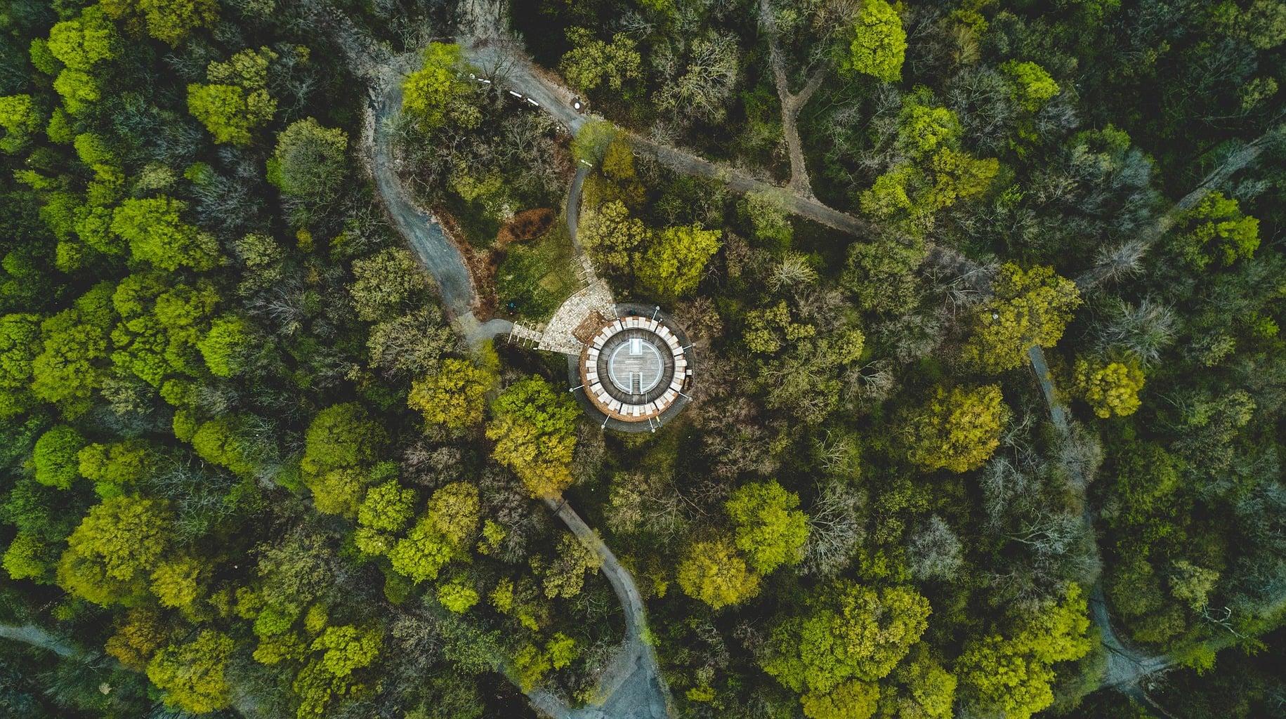 fotgrafía aérea de un bosque