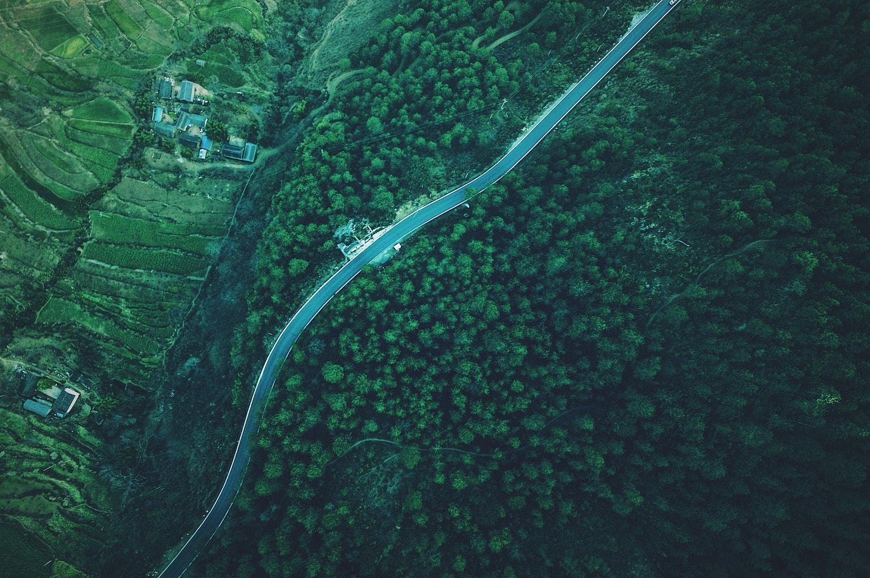 fotgrafía aérea de un bosque verde