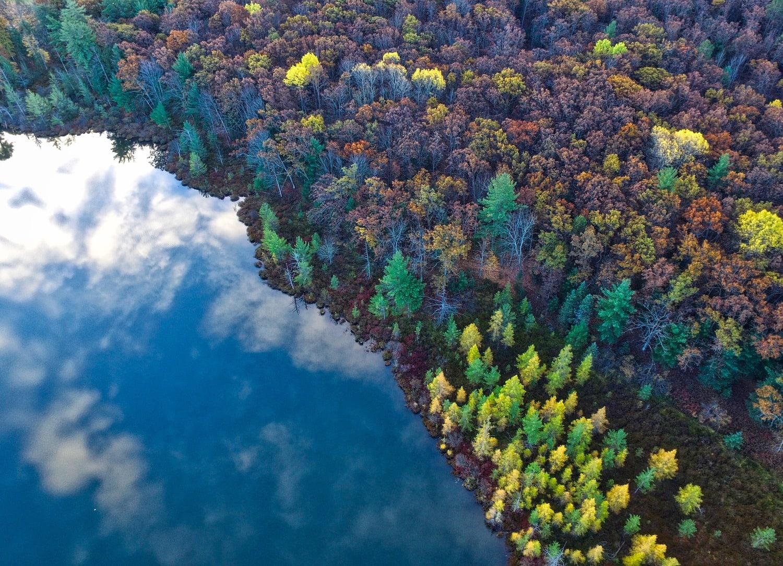 fotografía aérea árboles y río