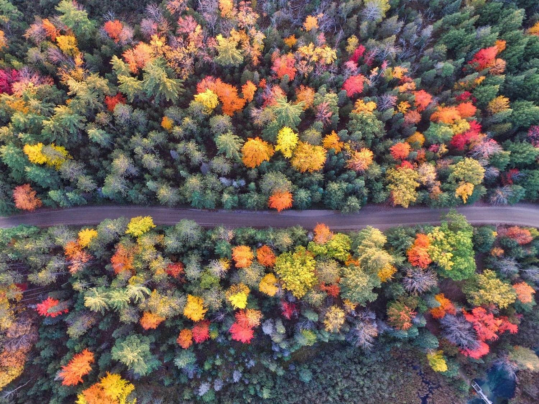 fotgrafía aérea de árboles
