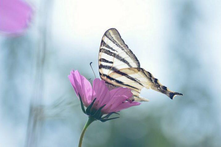 fotografía macro de una mariposa