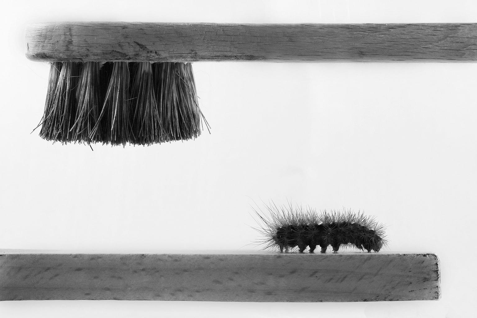 fotografía minimalista cepillo