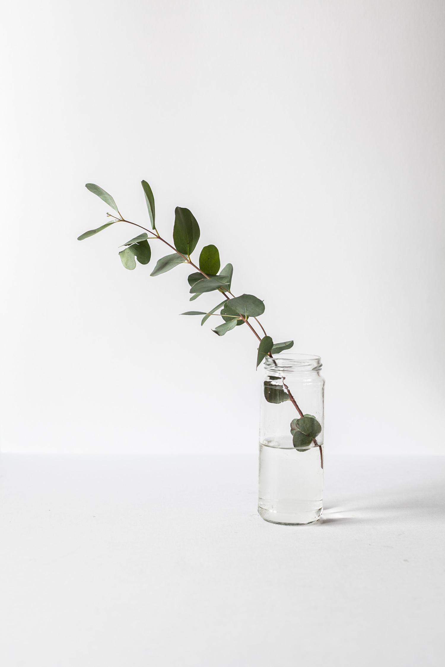 fotografía minimalista planta