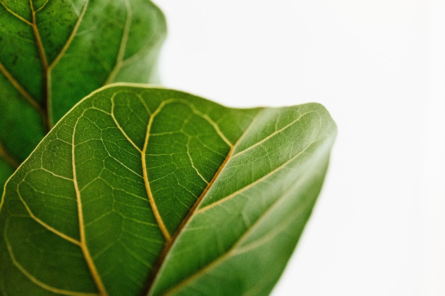 fotografía minimalista hojas verdes