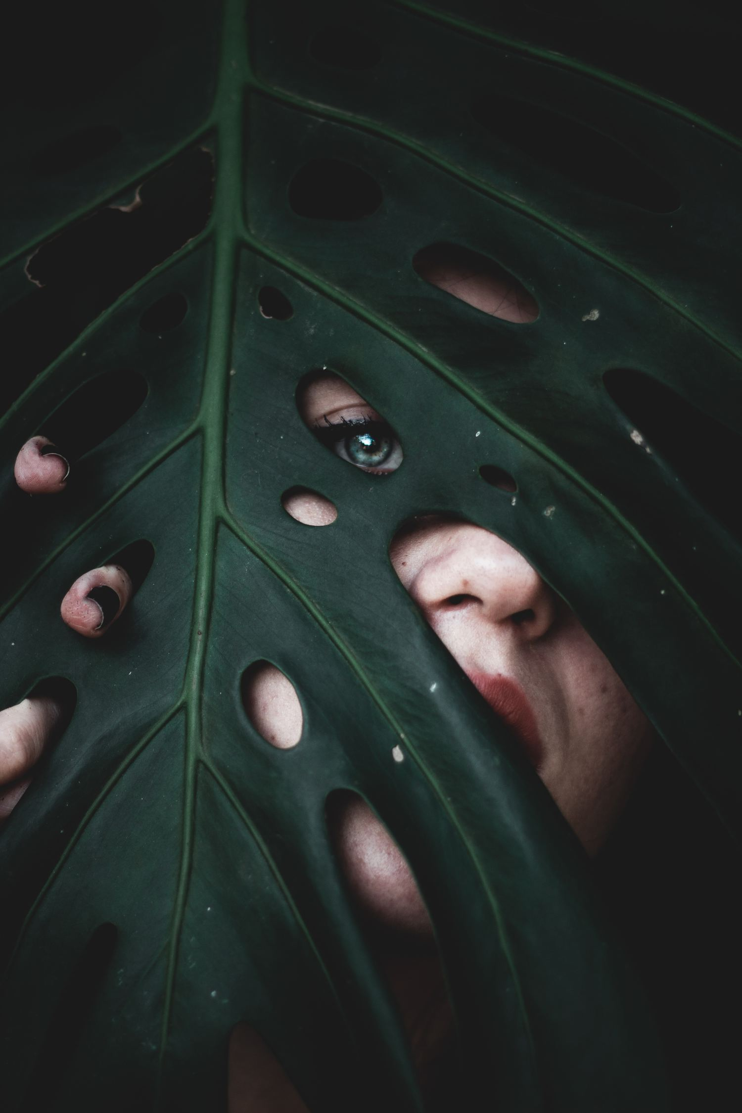 fotografía creativa de un ojo entre una planta