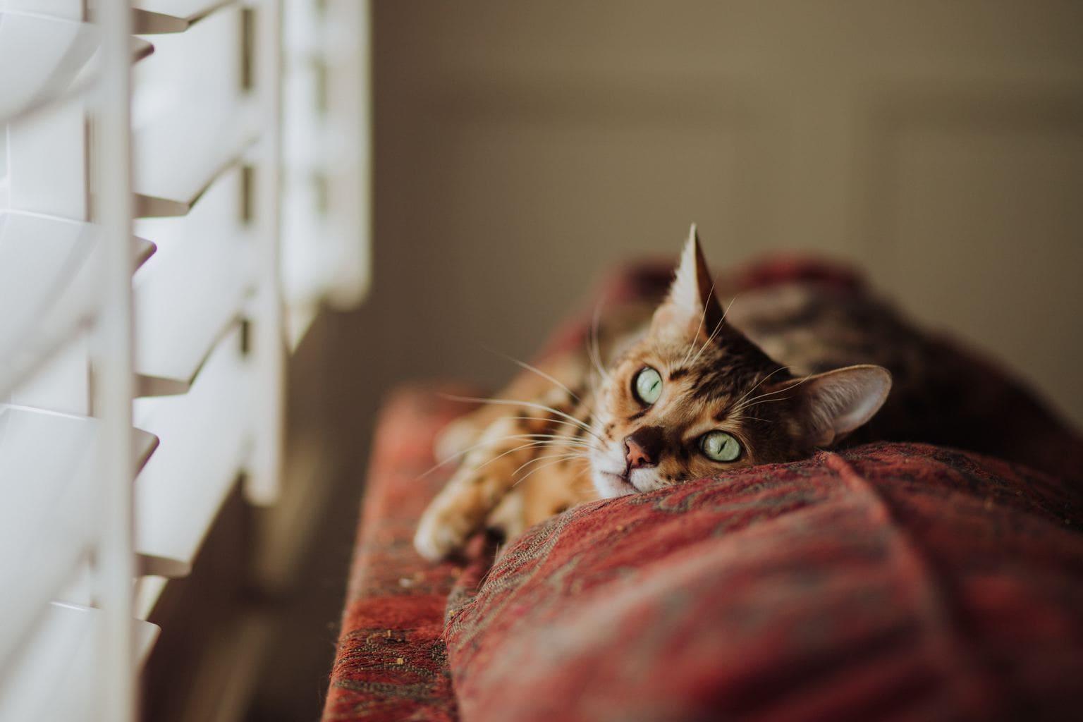 fotografía de un gato
