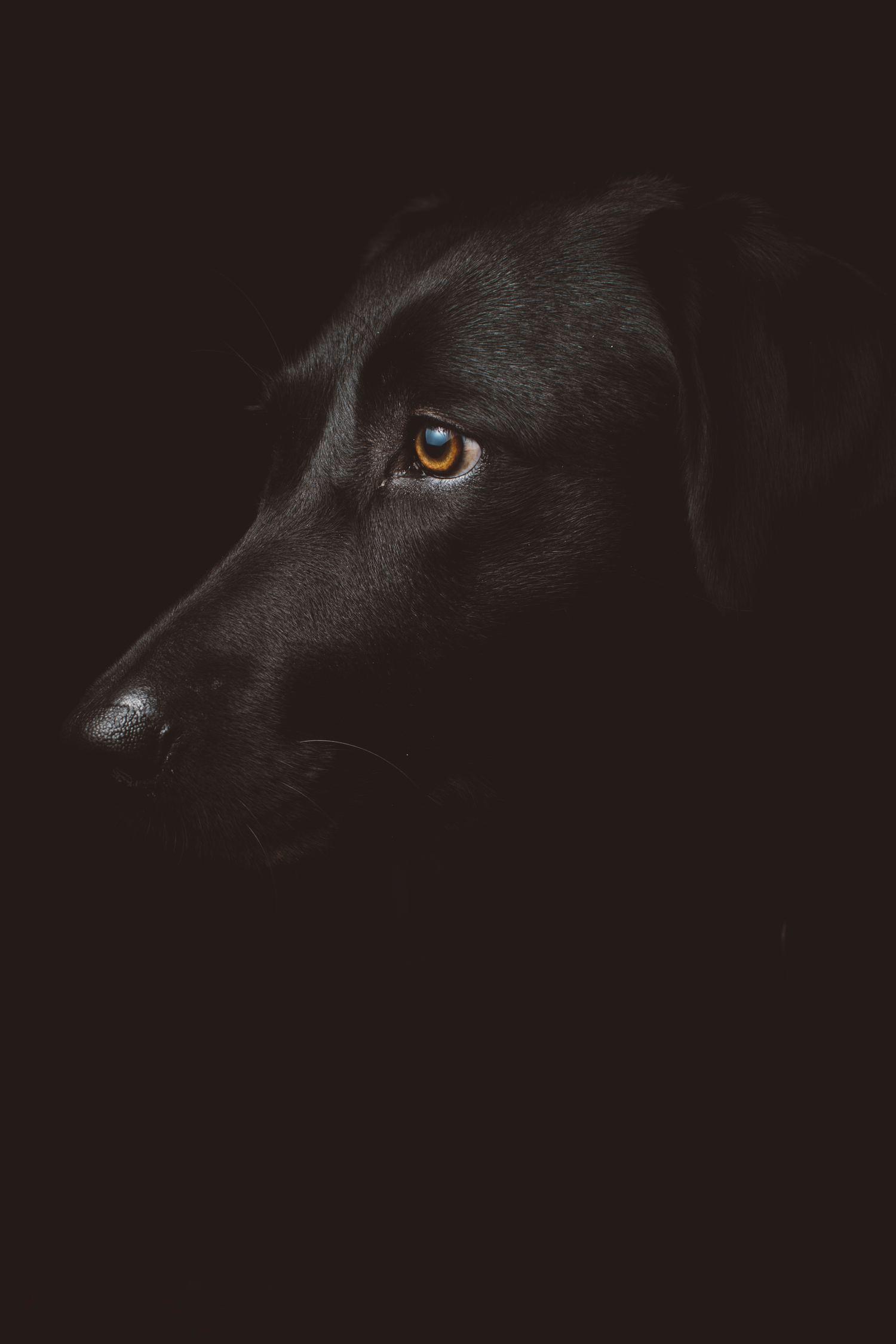 fotografía de un perro negro
