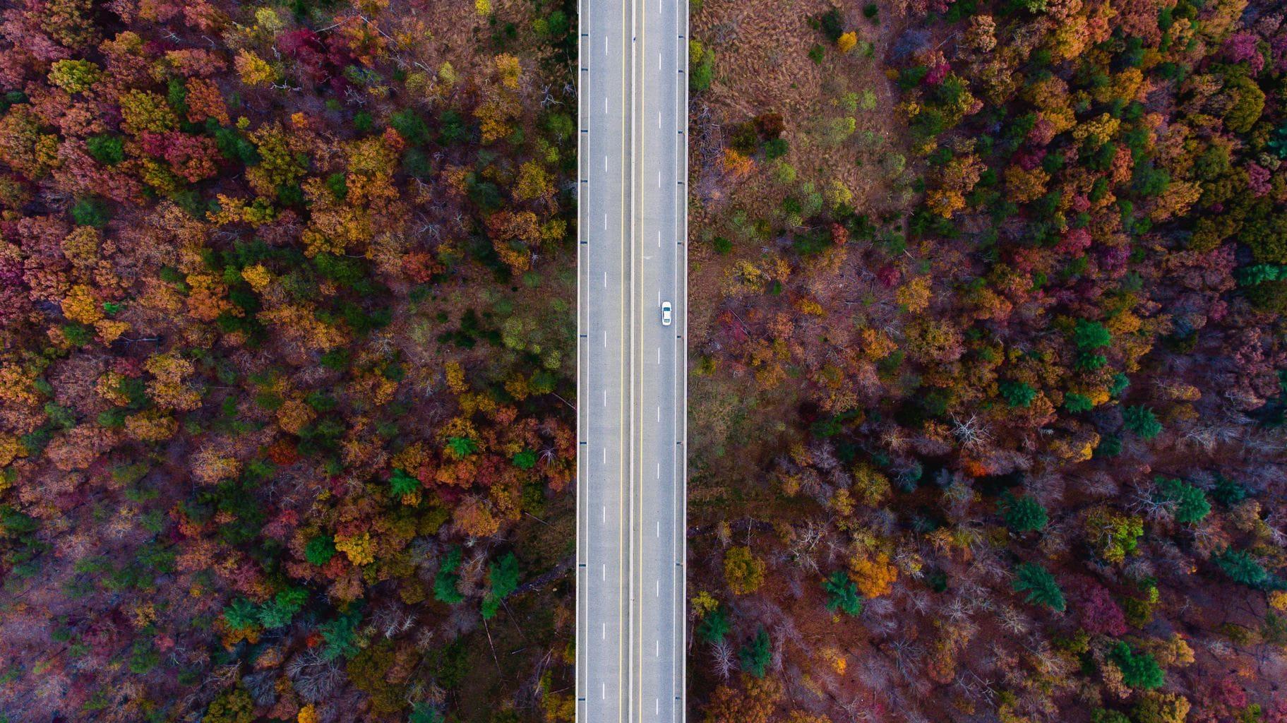 fotografía aérea de una carretera en un bosque