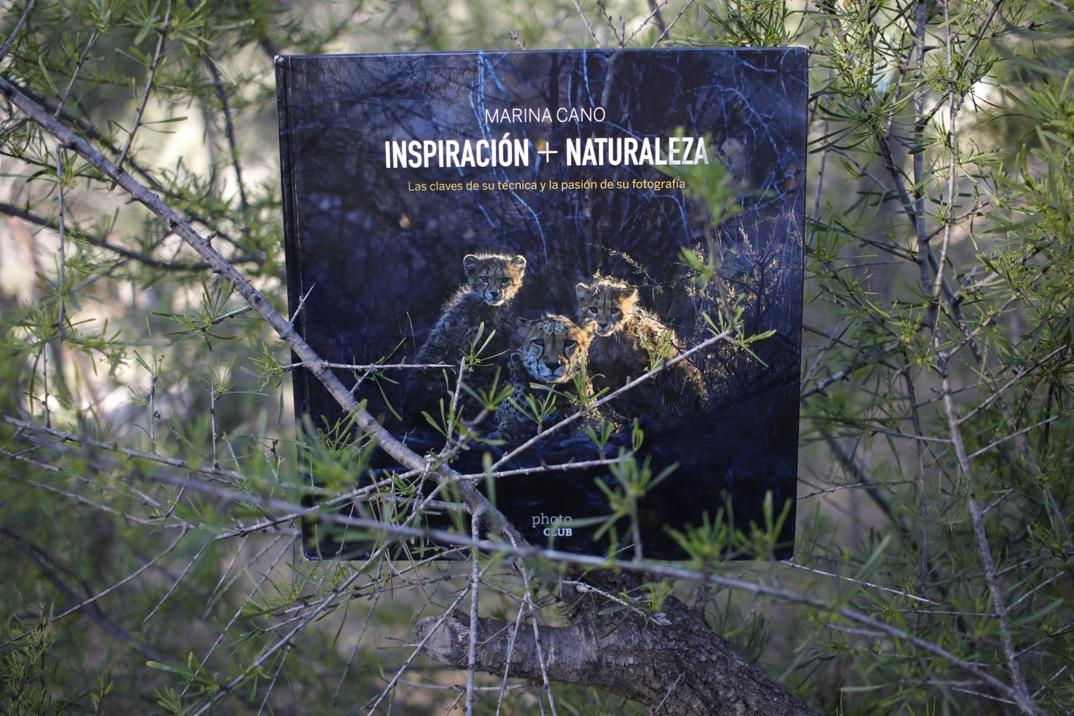 Portada en árbol Libro Inspiración + Naturaleza