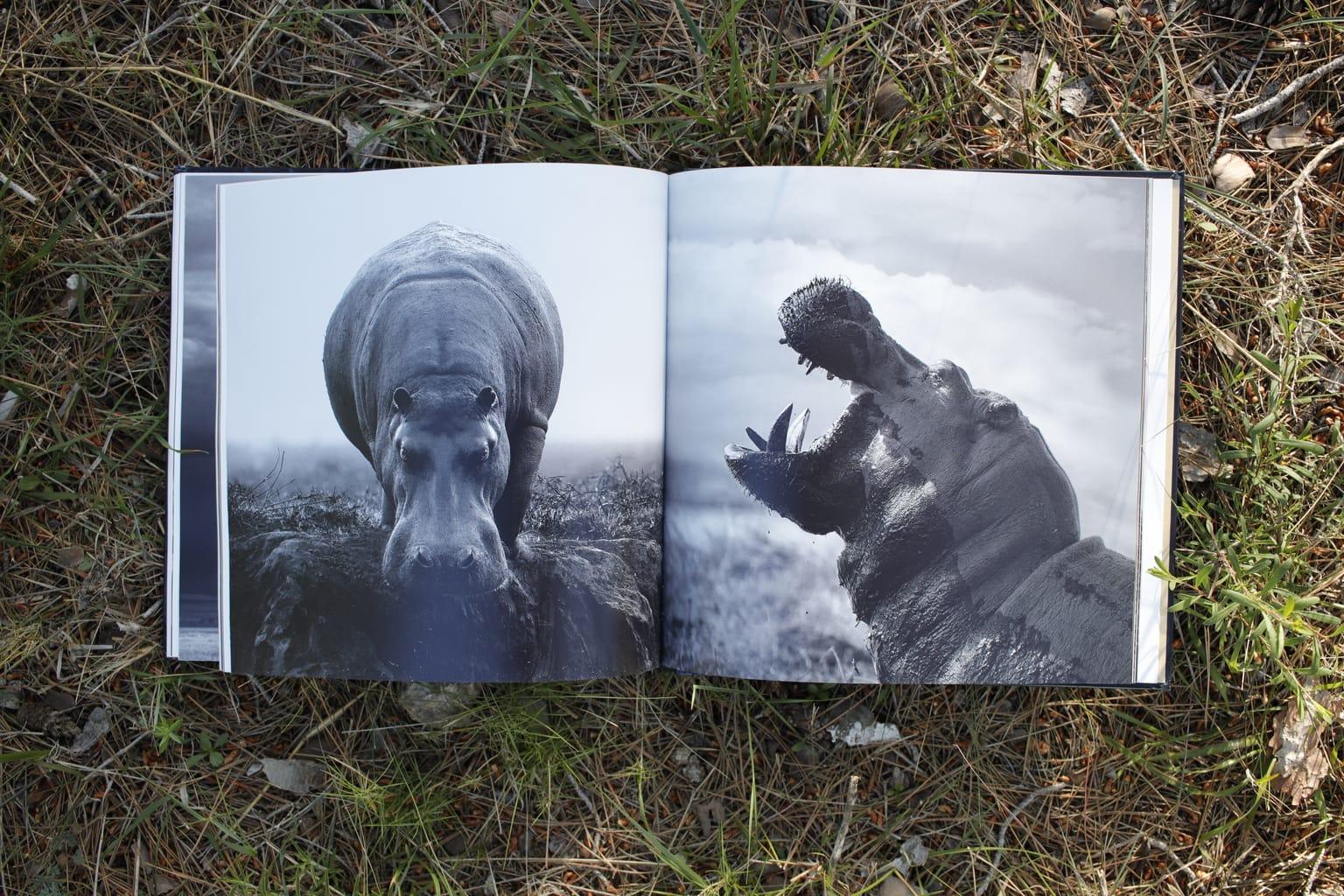 Hipopótamo Libro Inspiración + Naturaleza