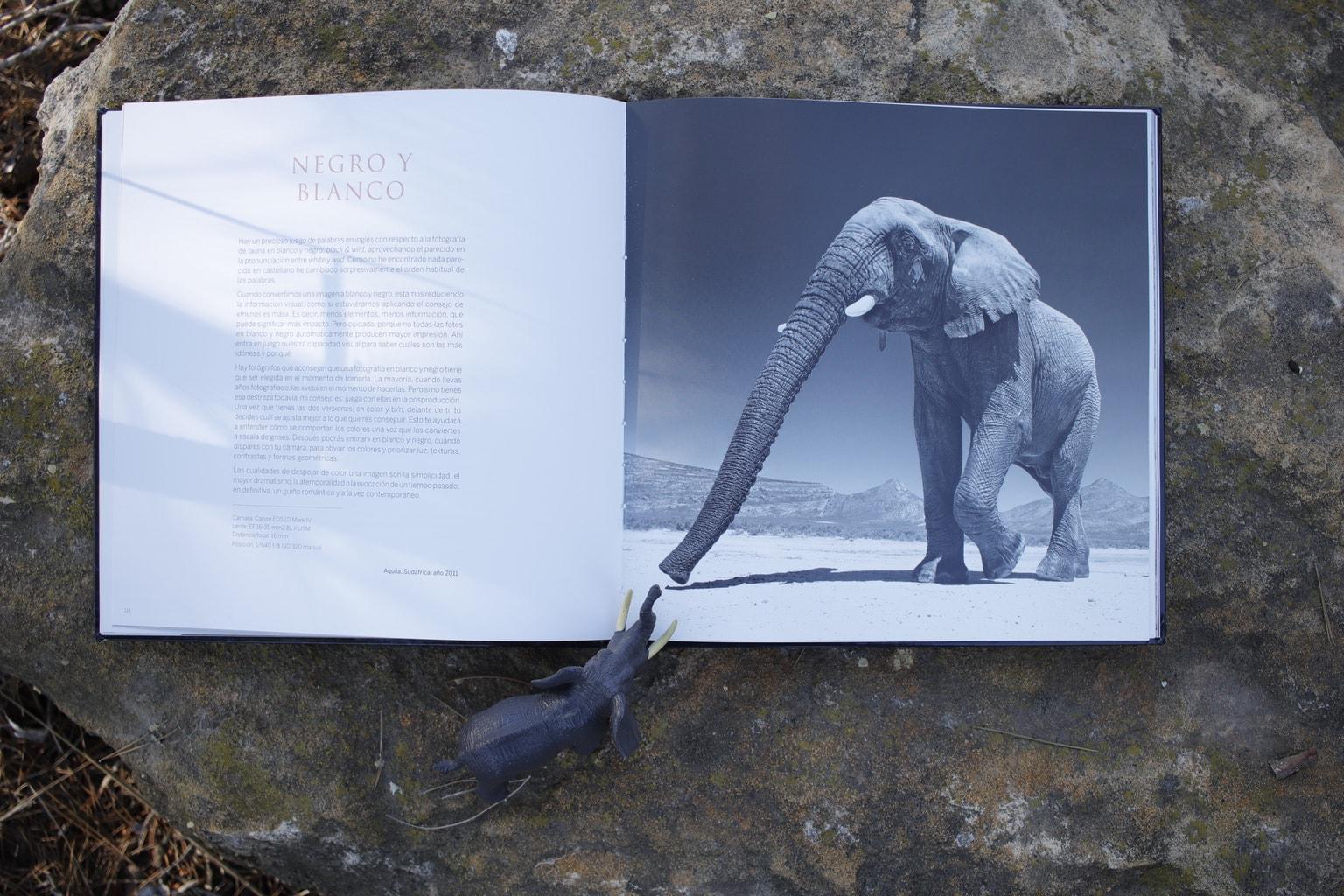 Negro y blanco Libro Inspiración + Naturaleza