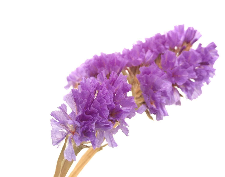 Fotografía flores clave alta