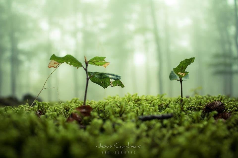 Fotografía macro de plantas