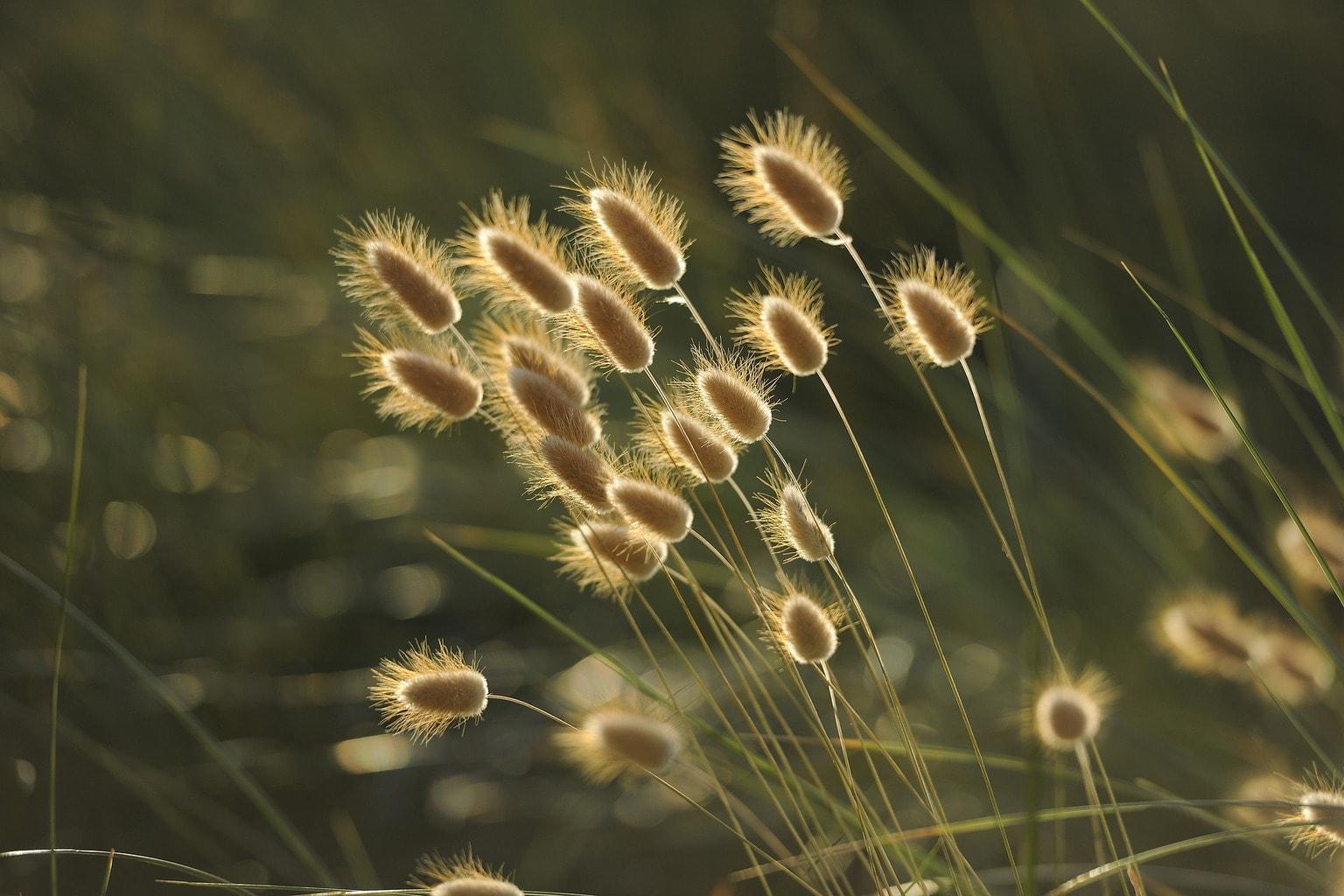 Fotografía plantas