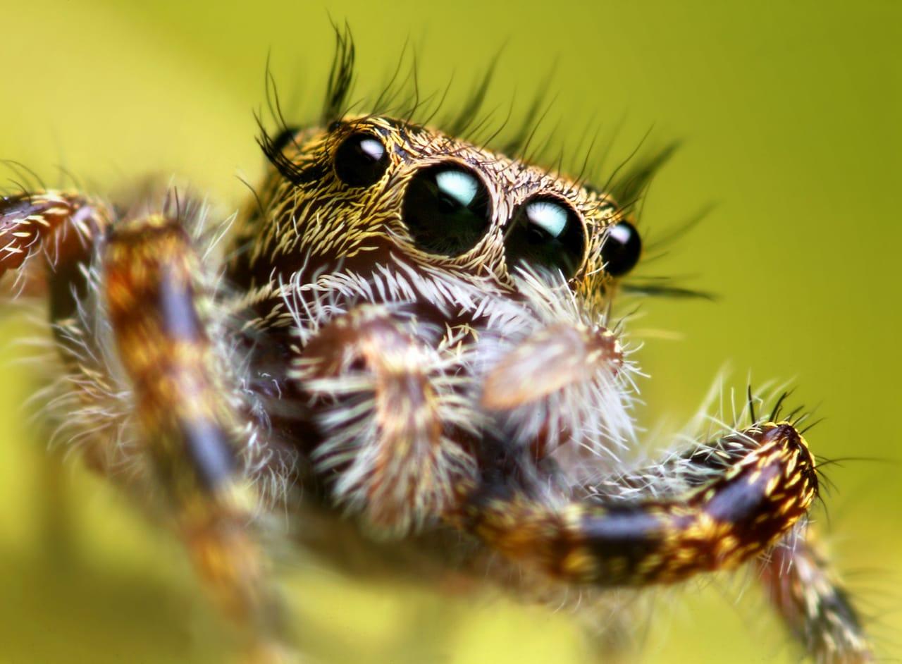 fotografía macro araña
