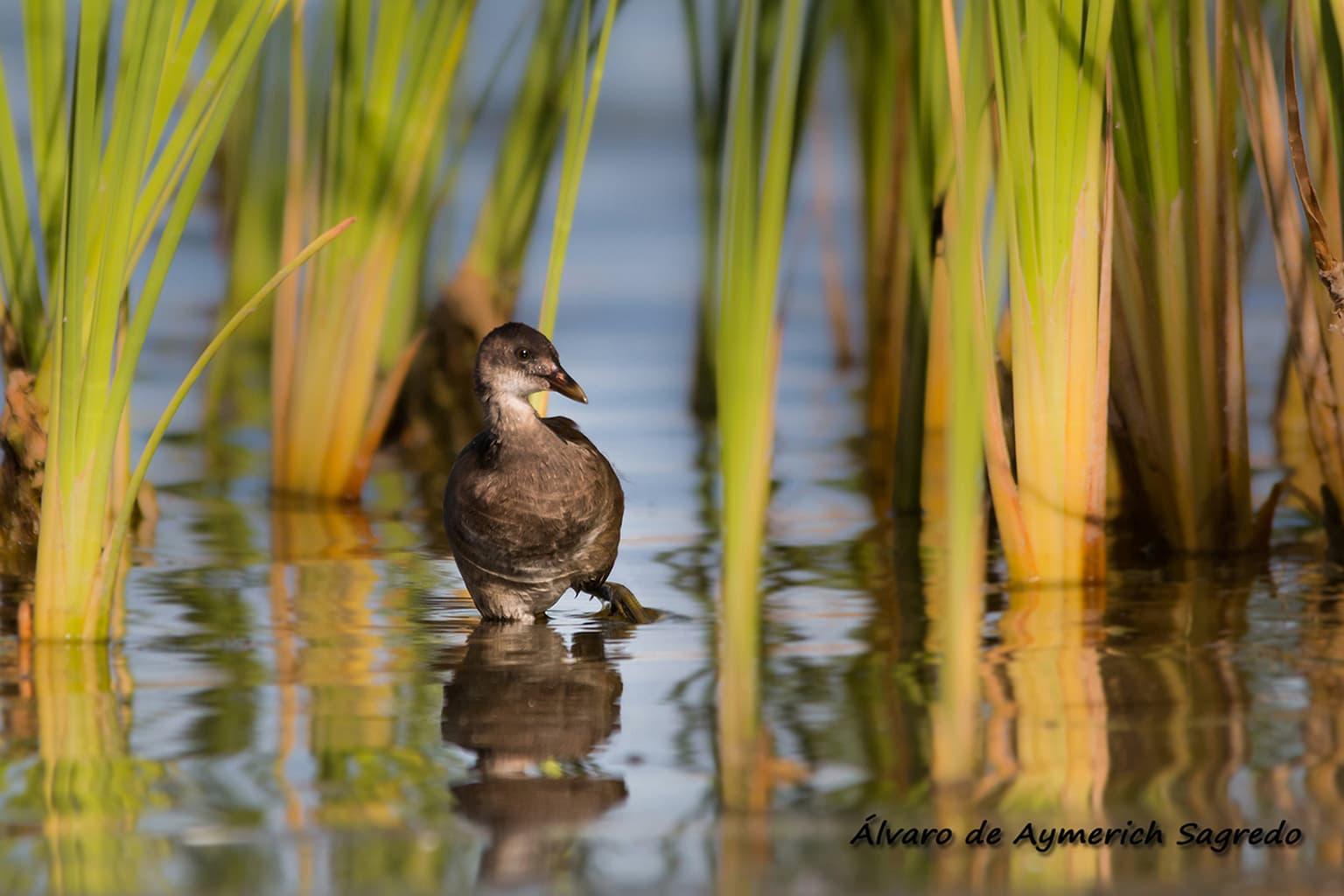 fotografía zoom pájar en el agua