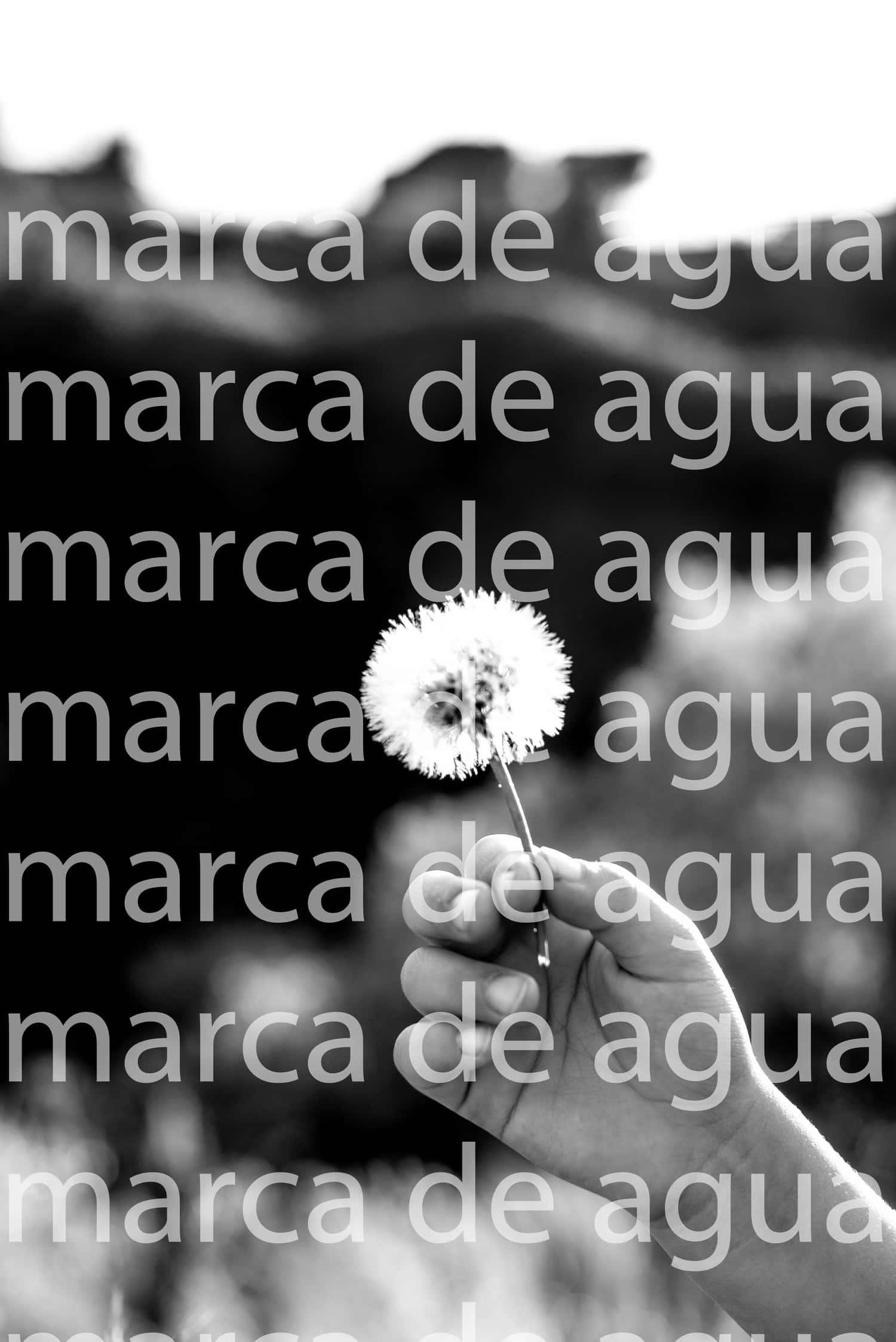 fotografía en blanco y negro marca de agua