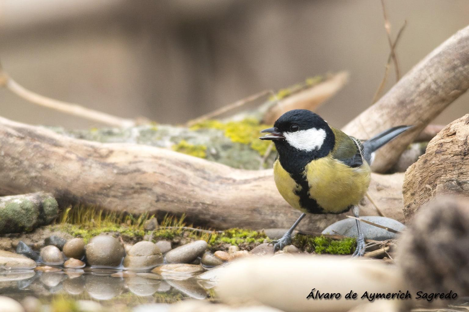 fotografía zoom de un pájaro