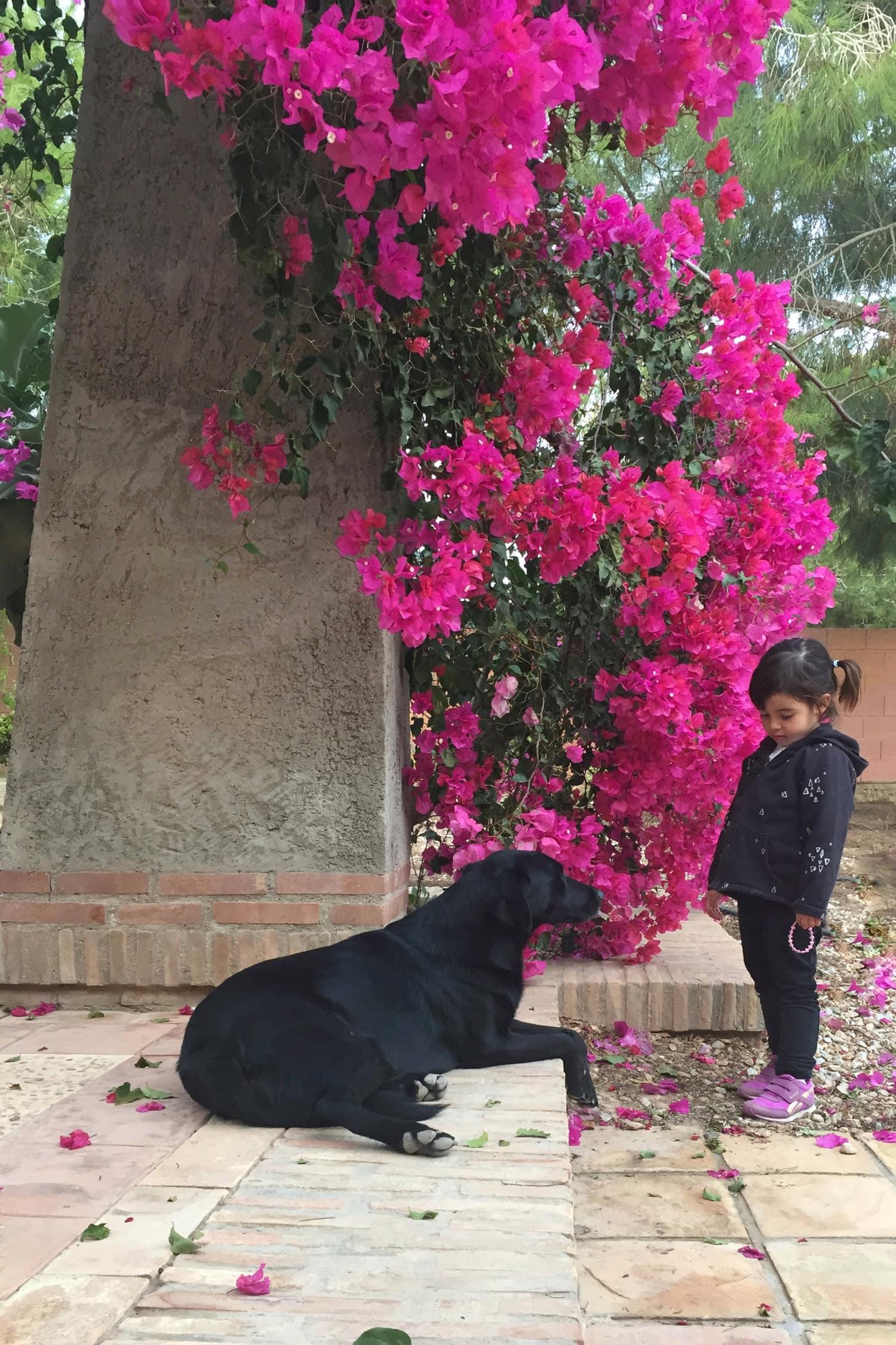 fotografía móvil de una niña con un perro
