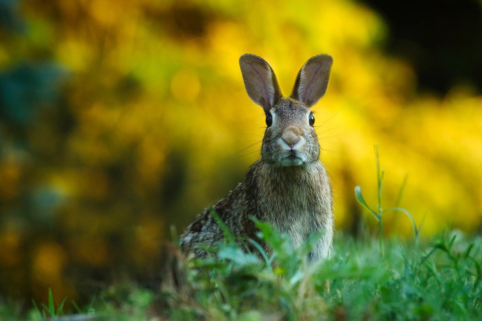 fotografía de un conejo tomada con un teleobjetivo