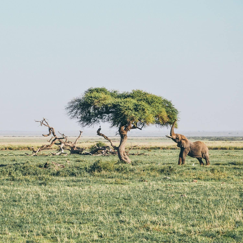 La impresionante Kenya