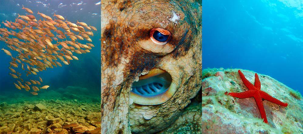 Fotos a poca profundidad de peces