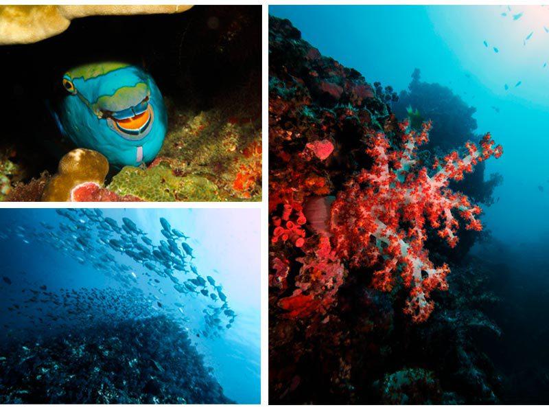collage fotografías submarinas