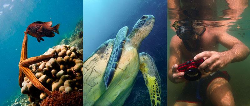 ejemplos fotografías submarinas