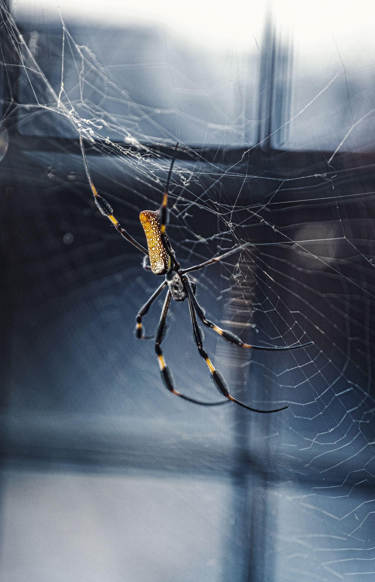 Fotografía halloween de una araña