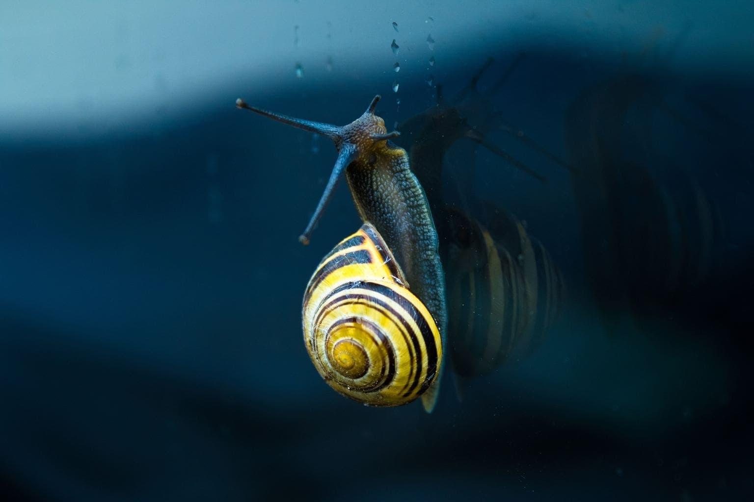 fotografía macro de un caracol