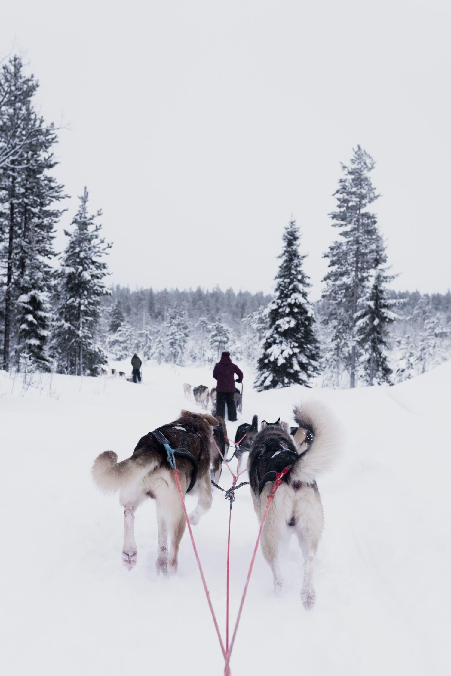 Laponia nieve y trineo