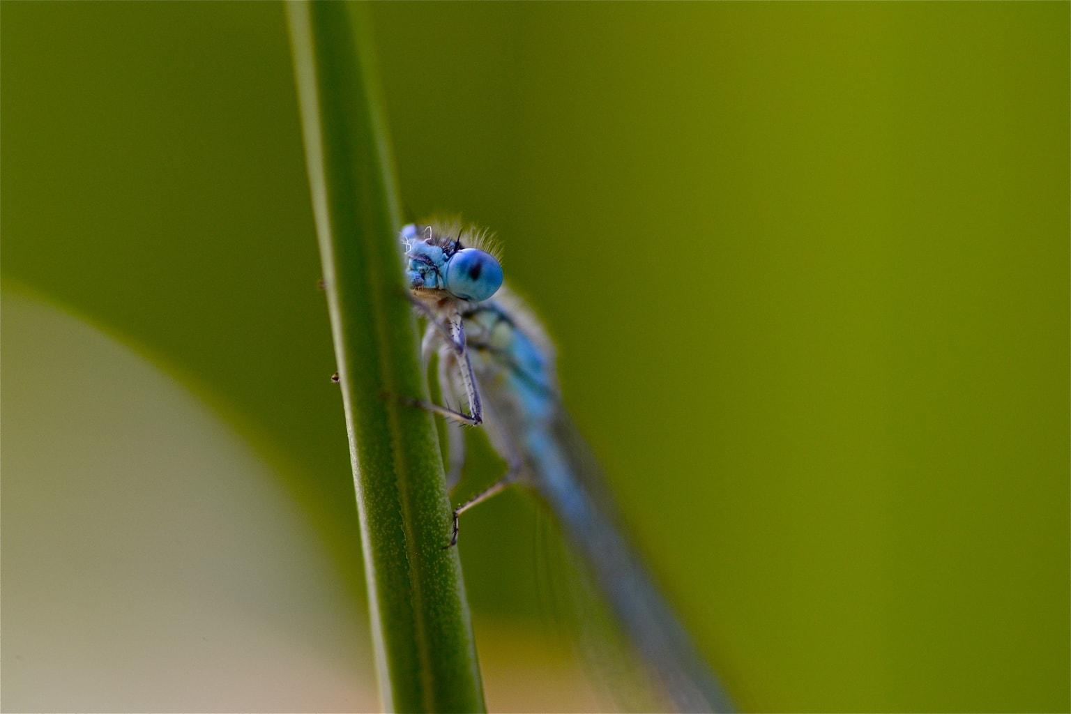 Insecto azul sobre fondo verde