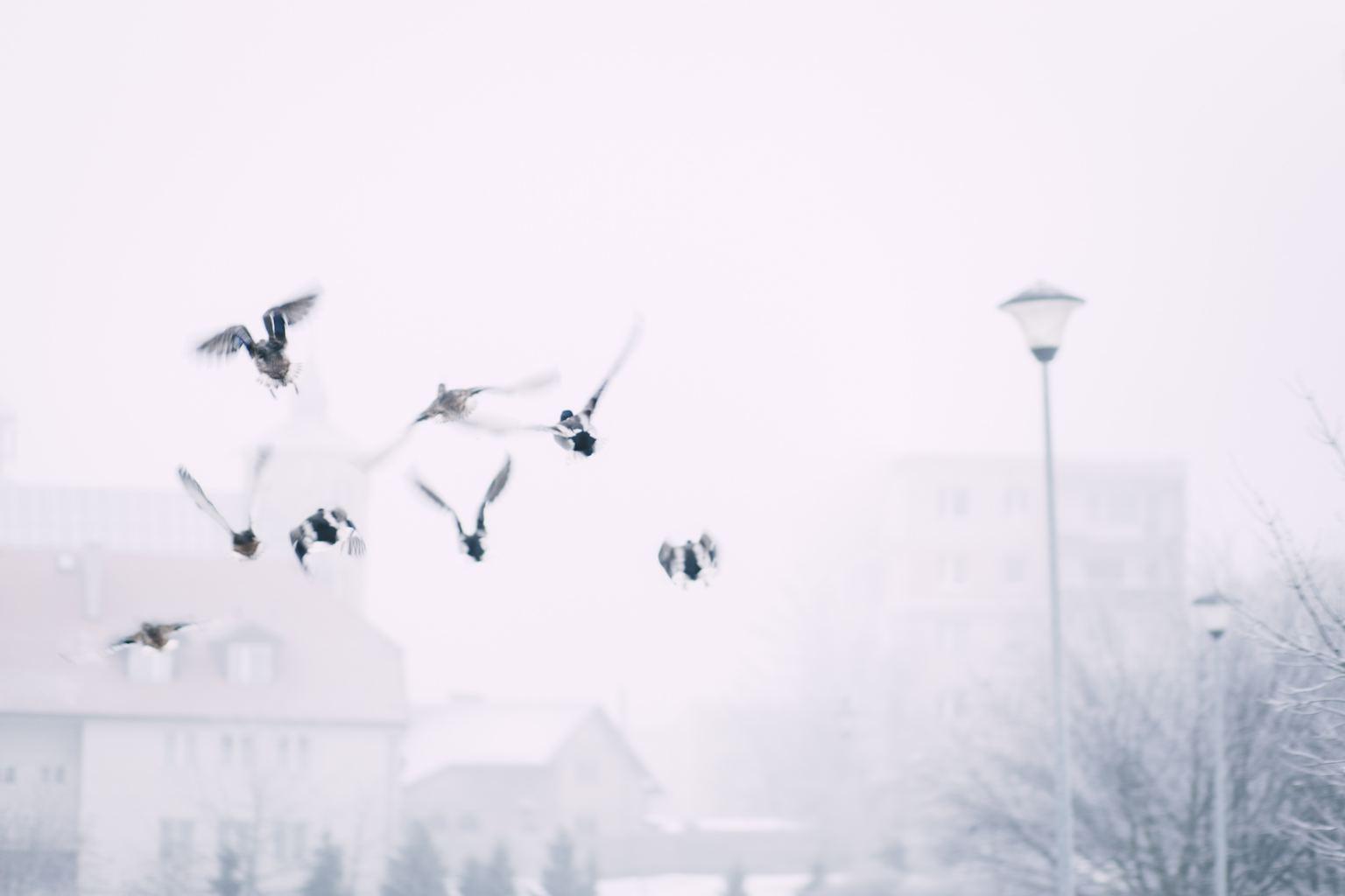 Pájaros volando en ciudad nevada y farola al fondo