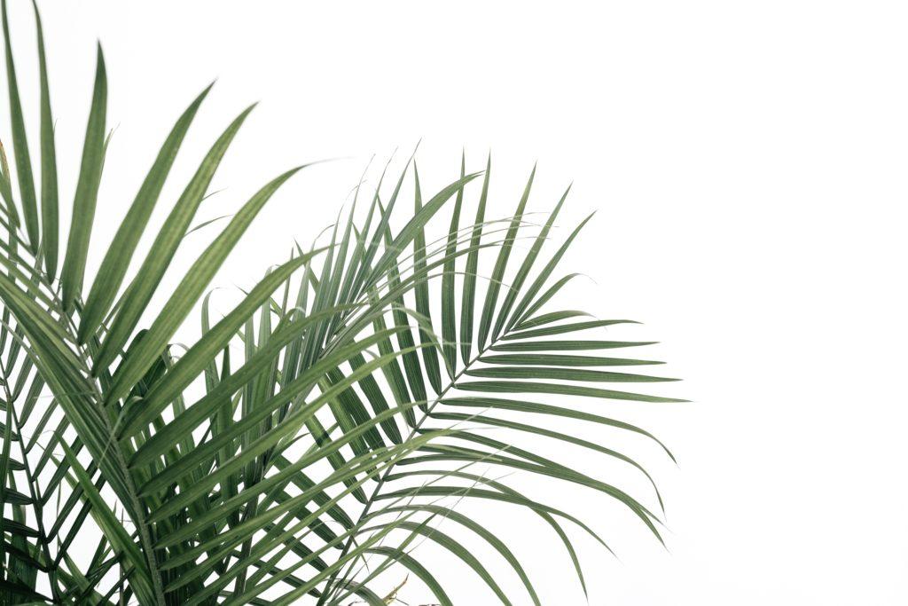 planta fondo blanco