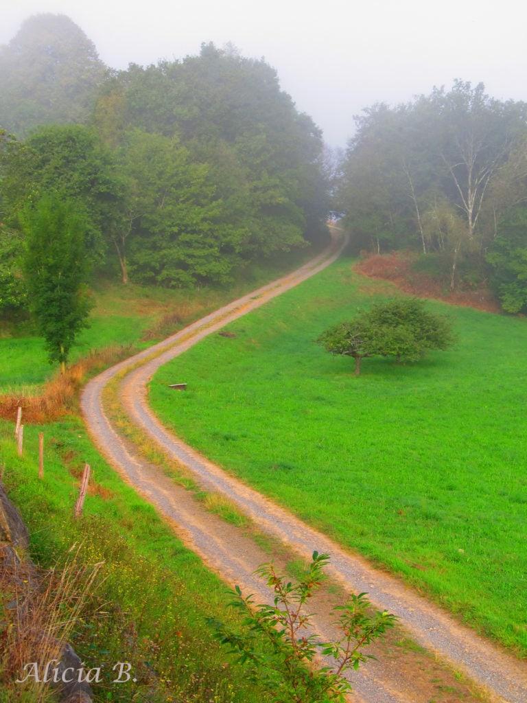 Paisaje verde con camino