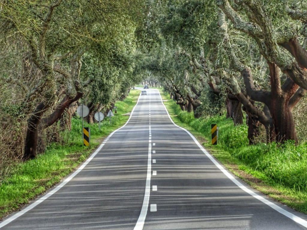 Punto de fuga de carretera entre árboles