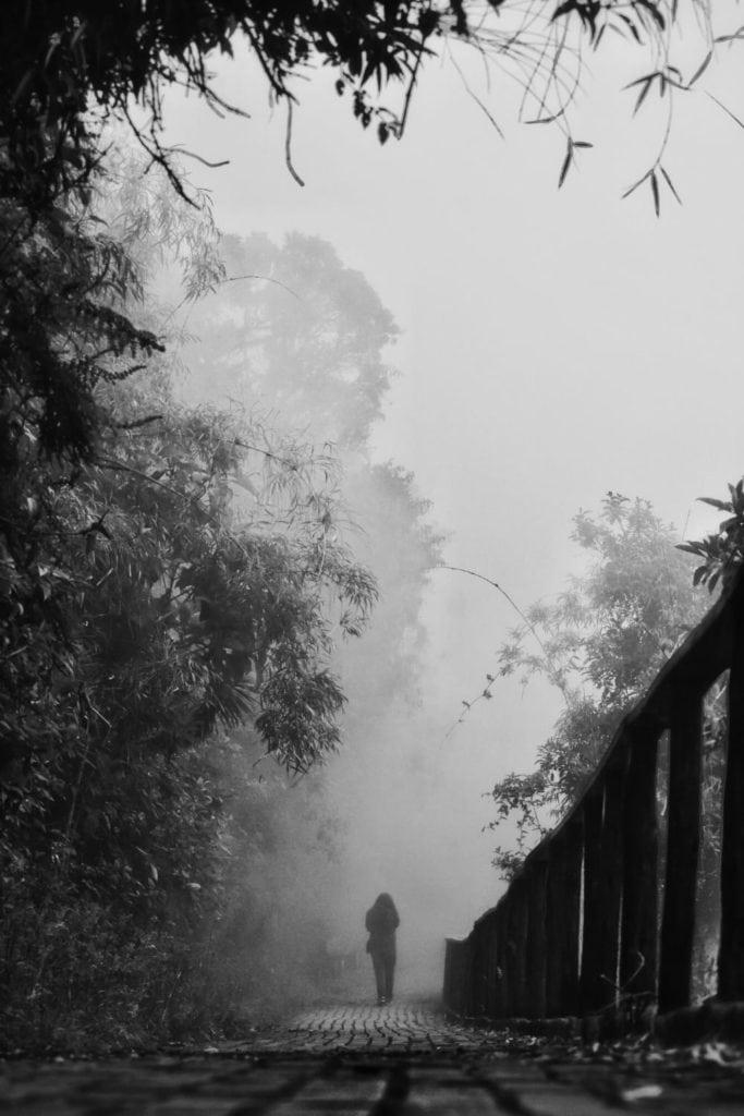 Niebla en el parque