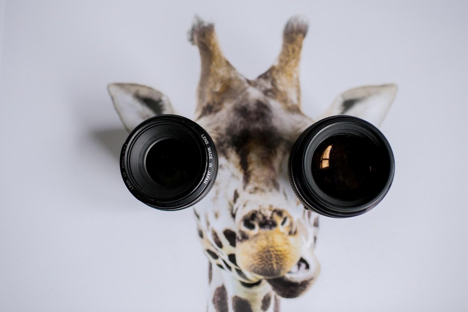 objetivos creativos jirafa