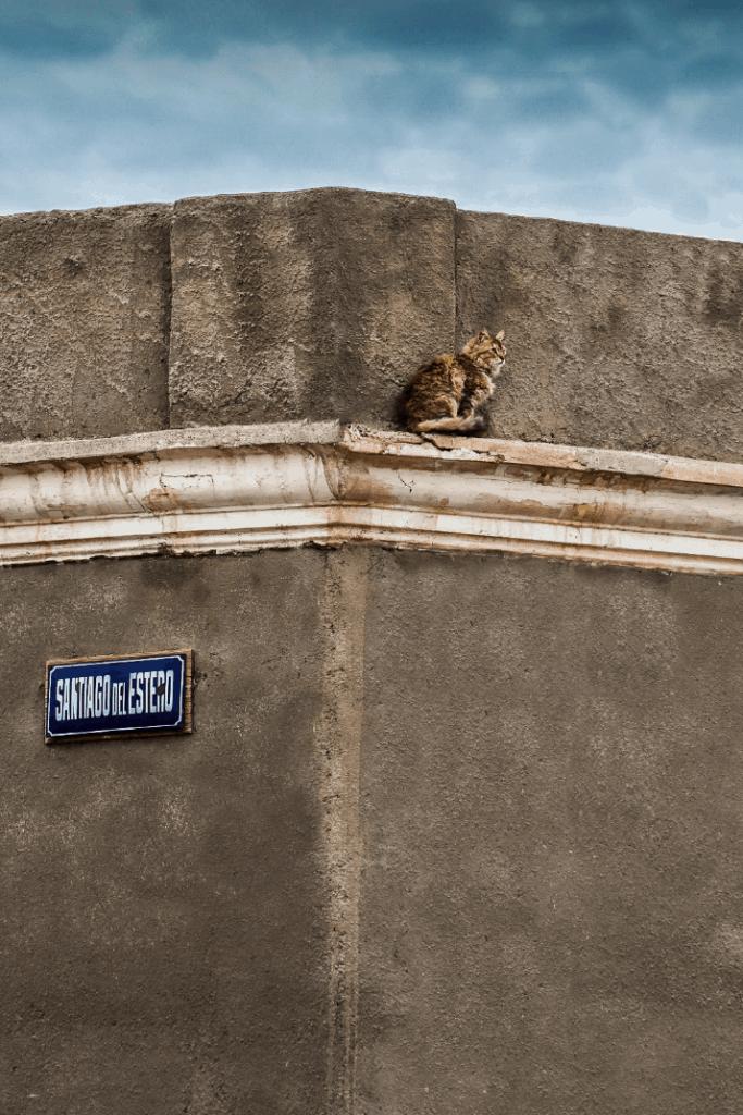 Gato en fachada