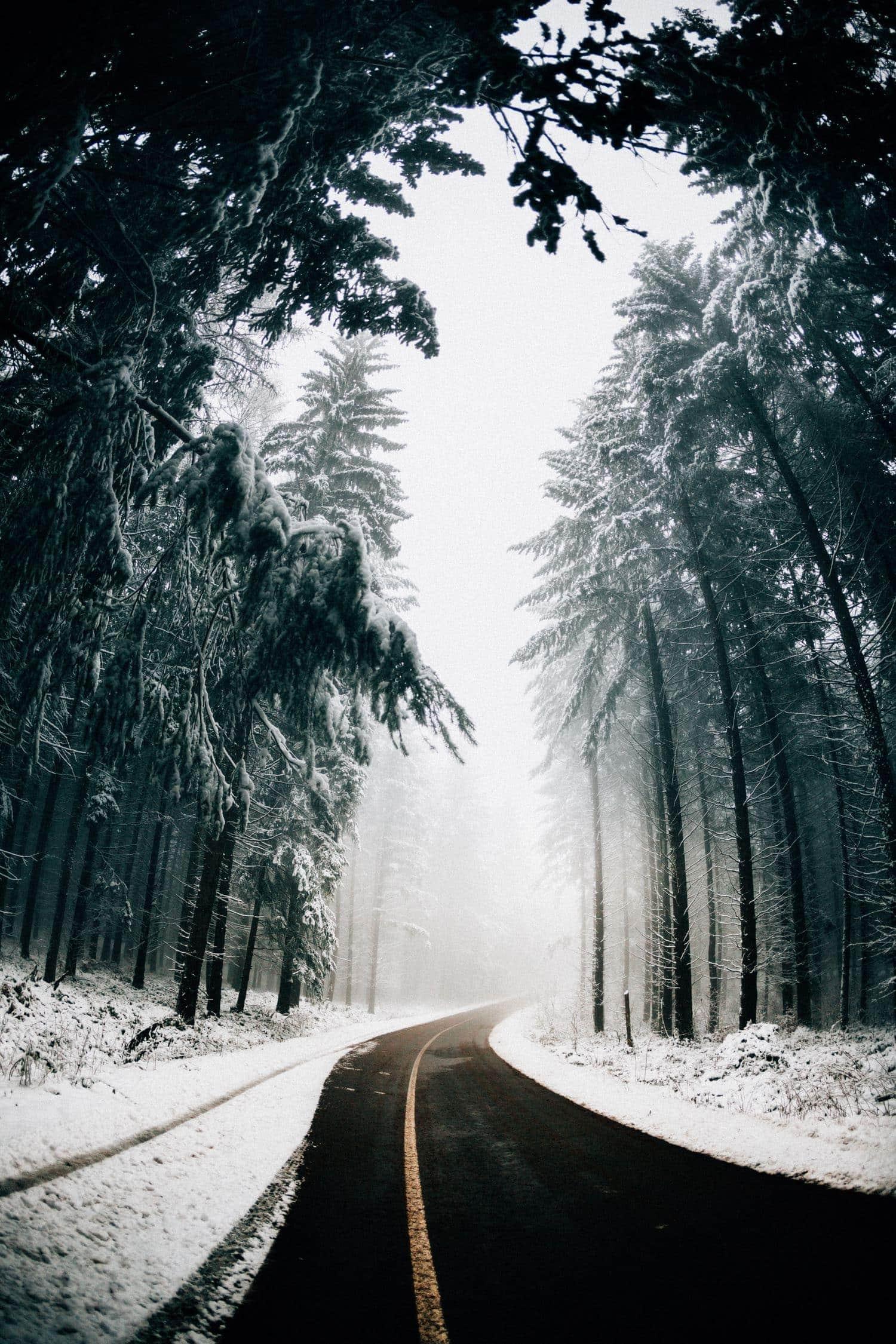 carretera en bosque nevado