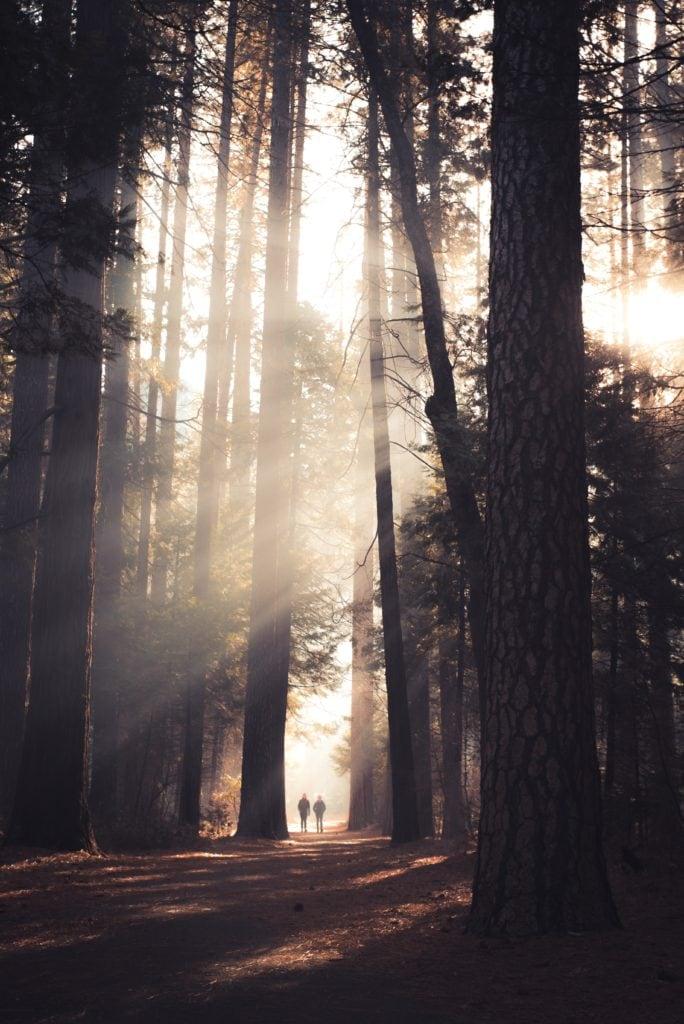 bosque luz niebla paisaje