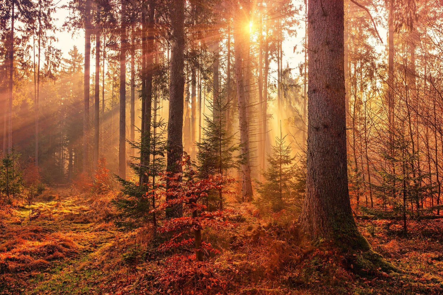 bosque atardecer paisaje